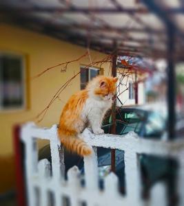blur_cat.jpg