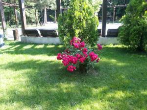2012-06-11 17.04.41-1.jpg