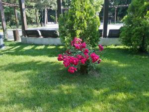 2012-06-11 17.04.41-2.jpg